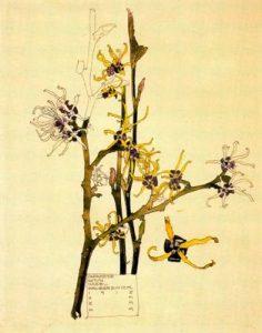 Flores de Mackintosh para blog milartienda.com